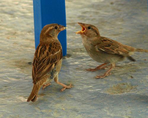 Birds_Crust