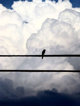 BirdOnWire