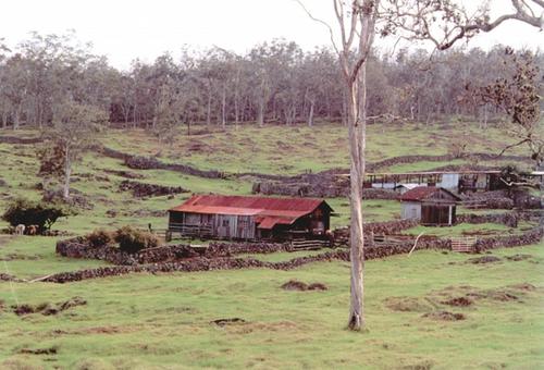Pauahi Dairy