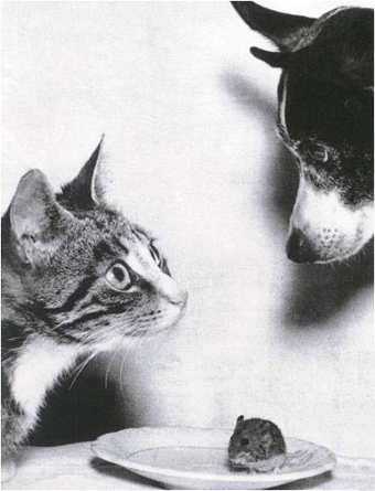 Cat_dog_mouse