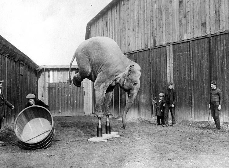 Elephantstand